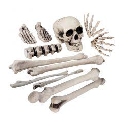 Squelette en morceaux