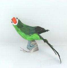 Perroquet Vert - 34 cm