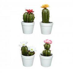 Cactus Fleuri en Pot - Coloris au Choix | jourdefete.com