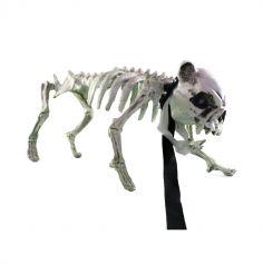 Rocky le chien squelette