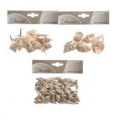 Coquillages variés naturels - Modèle au Choix
