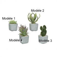 Plante Grasse dans Pot en Béton - Modèle au Choix