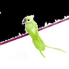 Pince Perruche Décorative – Vert