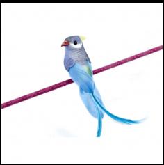 Pince Perruche Décorative – Bleu