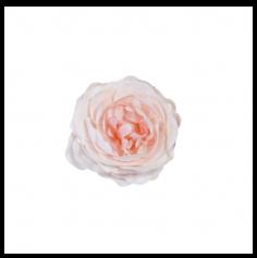 Rose Ancienne Décorative de Table - Rose