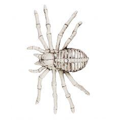 Araignée Squelette