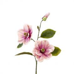 magnolia rose 2 fleurs et un bouton | jourdefete.com