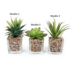 Plante Grasse Artificielle dans Pot en verre avec gravier - Modèle au Choix