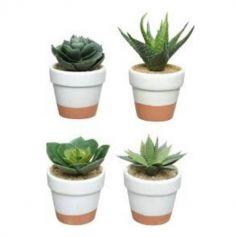 Plante Grasse dans Petit Pot en Terre Cuite - Modele au Choix | jourdefete.com