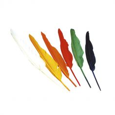 Pack de 12 plumes multicolores