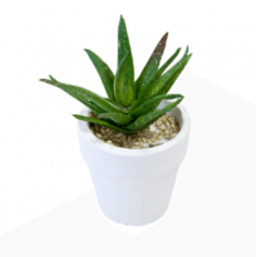 Décoration Aloe Vera en pot en céramique
