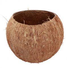 noix-coco-decoration   jourdefete.com
