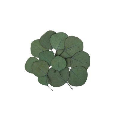 sachet de 15 feuilles eucalyptus   jourdefete.com