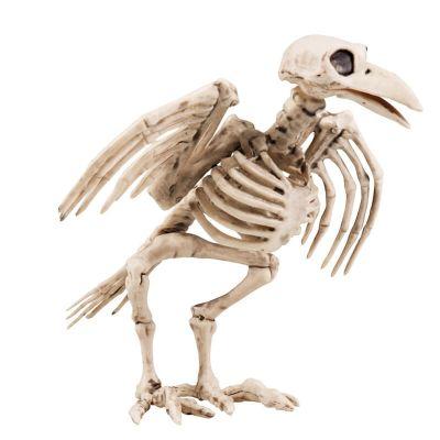 Corbeau Squelette