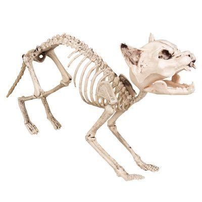 Décoration Halloween - Squelette de Chat