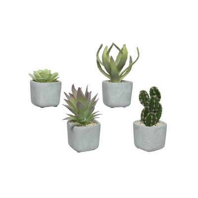 plante-grasse-pot-beton | jourdefete.com