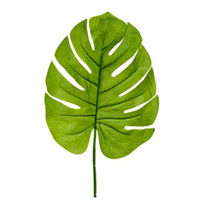 feuille-tropical-philodendron-jungle-palmier|jourdefete.com