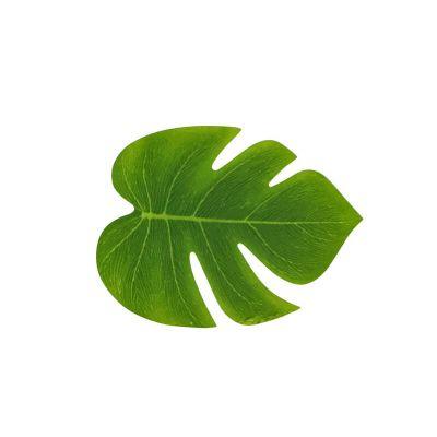 feuilles-tropicales-decoration | jourdefete.com